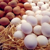 Яйцо 1 кат.